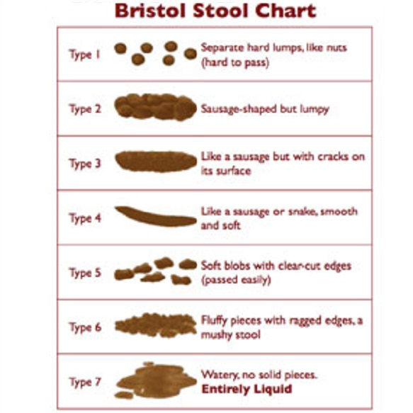 Bristol Stool Chart Freshener Novelty Nurse By Pedrows